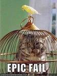 funny-pictures-bird-cat-cage