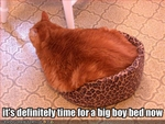 funny-pictures-your-cat-wants-a-bigger-bed