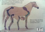 fail-owned-anatomy-book-fail
