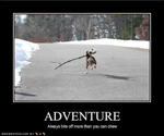 funny-dog-pictures-adventure-bite