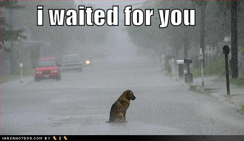 funny-dog-pictures-alone-street-rain-storm-waiting