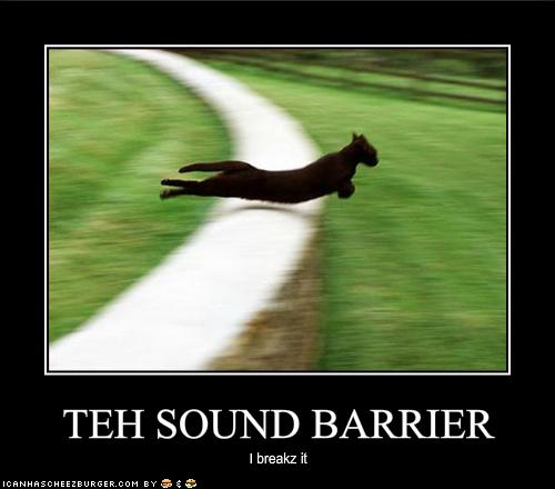 funny-pictures-cat-breaks-the-sound-barrier