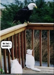 funny-pictures-cat-gives-his-friend-advice