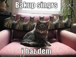 funny-pictures-cat-has-back-up-singers