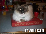 funny-pictures-cat-hopes-you-enjoy-your-pizza