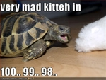 funny-pictures-cat-is-about-to-be-mad-at-turtle
