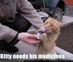 funny-pictures-cat-needs-his-medicine2