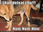 funny-pictures-cat-plans-to-defeat-dog