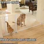 funny-pictures-cat-says-he-is-mans-best-friend