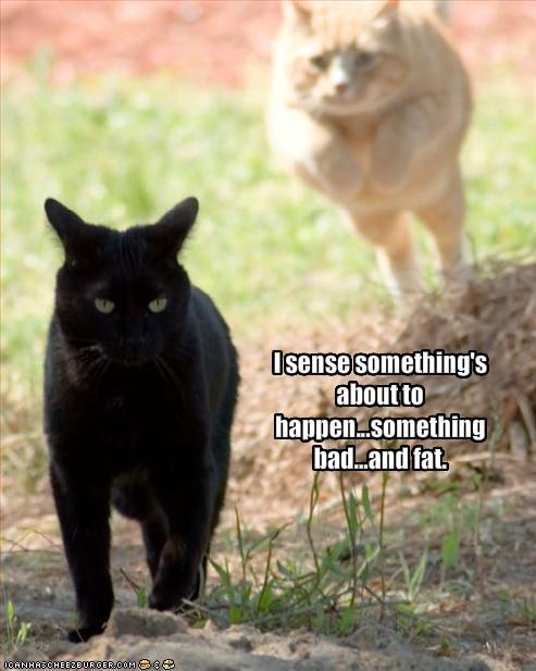 funny-pictures-cat-senses-something-bad-will-happen