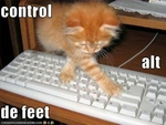 funny-pictures-cat-uses-the-keyboard-for-evil