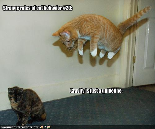 funny-pictures-cats-do-not-believe-in-gravity