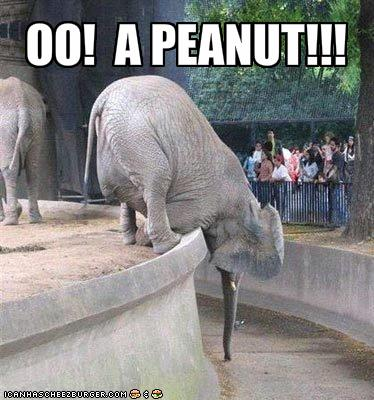 funny-pictures-elephant-is-excited-for-peanut