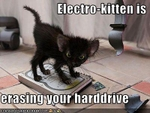 funny-pictures-kitten-erases-your-hard-drive