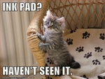 funny-pictures-kitten-has-not-seen-your-ink-pad