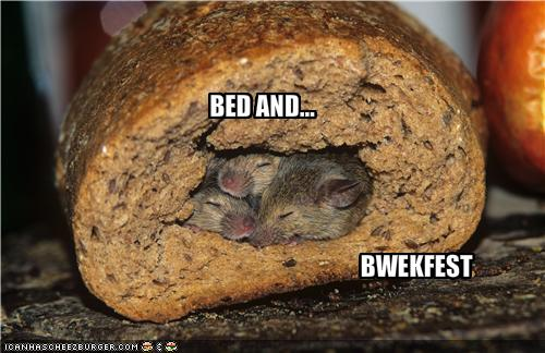 funny-pictures-mice-sleep-in-a-bed-and-breakfast