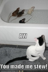 funny-pictures-you-made-stew-for-your-cat