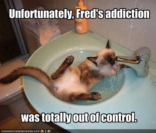 funny-pictures-your-cat-is-addicted-to-water