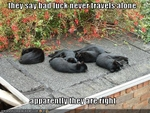 funny-pictures-black-cats-sleep-together