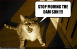 funny-pictures-cat-asks-you-to-stop-moving-the-sun