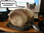 funny-pictures-cat-does-not-want-to-move