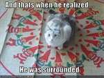 funny-pictures-cat-is-surrounded