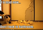 funny-pictures-cat-made-a-mess-in-the-bathroom