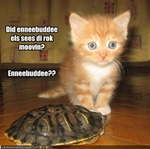 funny-pictures-cat-thinks-turtle-is-a-rock