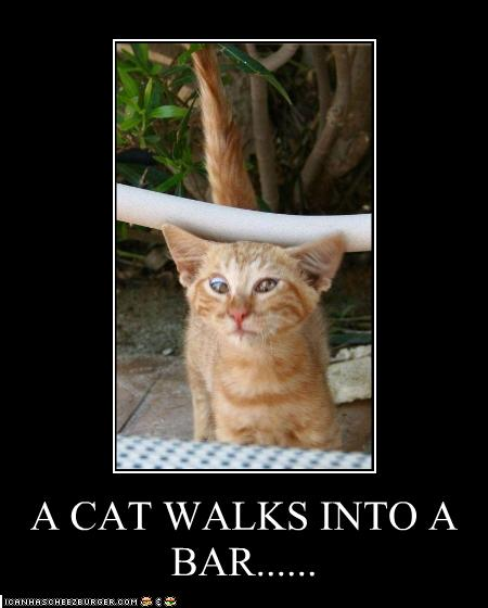 funny-pictures-cat-walks-into-a-bar