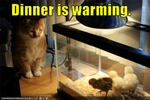 funny-pictures-cat-watches-his-dinner-heat-up