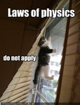 funny-pictures-laws-do-not-apply-to-kitten