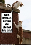 funny-pictures-romeo-cat-climbs-wall