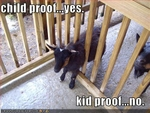 funny-pictures-your-fence-is-not-kid-proof