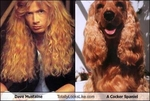 dave-mustaine-totally-looks-like-a-cocker-spaniel1