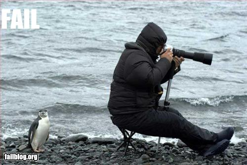 fail-owned-penguin-photographer-fail