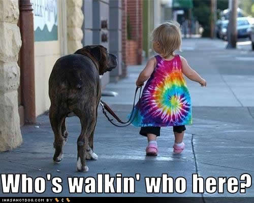 funny-dog-pictures-walkin-here
