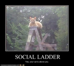 funny-pictures-cat-climbs-social-ladder