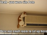 funny-pictures-cat-climbs-very-high