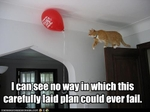 funny-pictures-cat-does-not-think-plan-will-fail