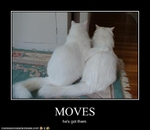 funny-pictures-cat-flirts-with-lady-cat