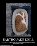 funny-pictures-cat-has-an-earthquake-drill