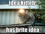 funny-pictures-cat-has-an-idea