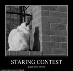 funny-pictures-cat-has-contest-with-his-shadow1