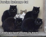 funny-pictures-cat-is-a-foreign-exchange-student1