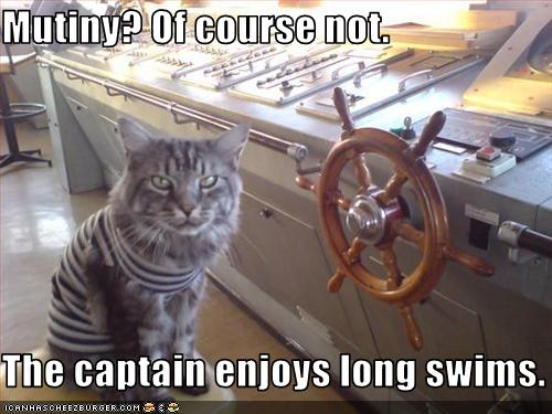 funny-pictures-cat-is-a-pirate