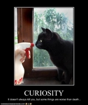 funny-pictures-cat-is-curious