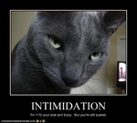 funny-pictures-cat-is-intimidating