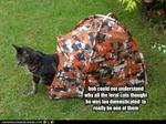 funny-pictures-cat-is-not-really-feral