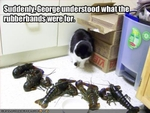 funny-pictures-cat-meets-lobsters
