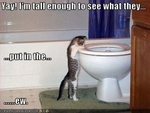 funny-pictures-cat-sees-inside-of-toilet